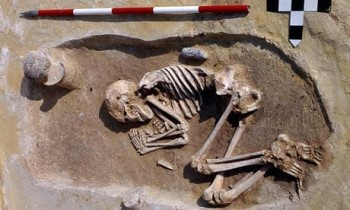 A male Neolithic skeleton from Kleinhadersdorf, Austria, with an adze at his back. Individuals buried with the tool seem to have had better nutrition in childhood. Photograph: Neugebauer/BDA